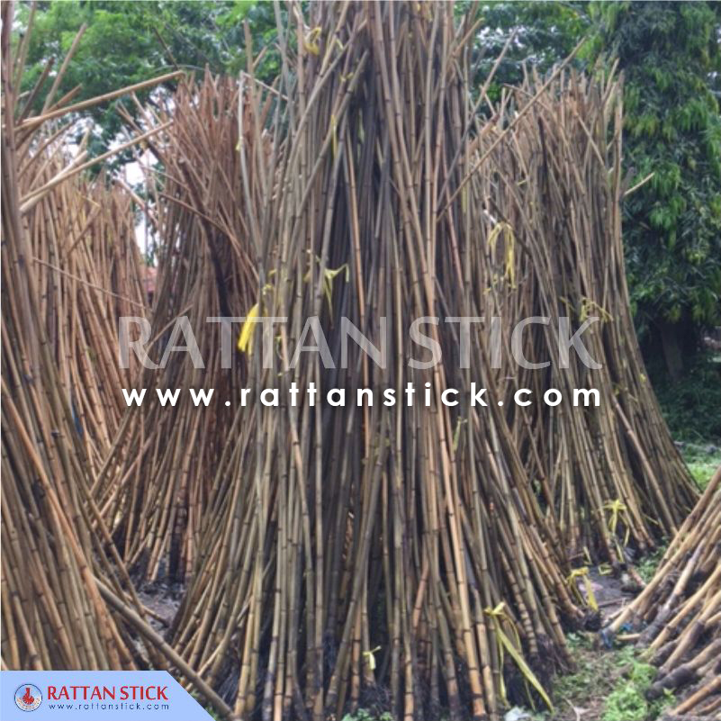 Manau Root For Polo Sticks