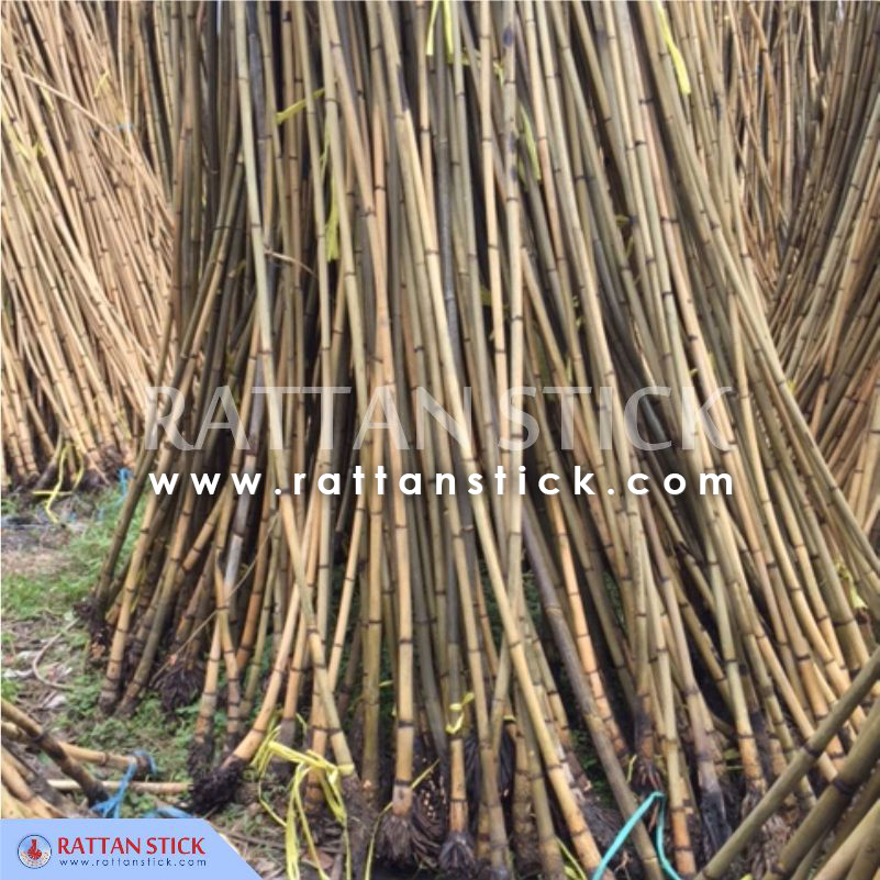 Rattan Manau Root For Walking Sticks